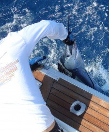 Deap Sea, Offshore, and Nearshore fishing charters