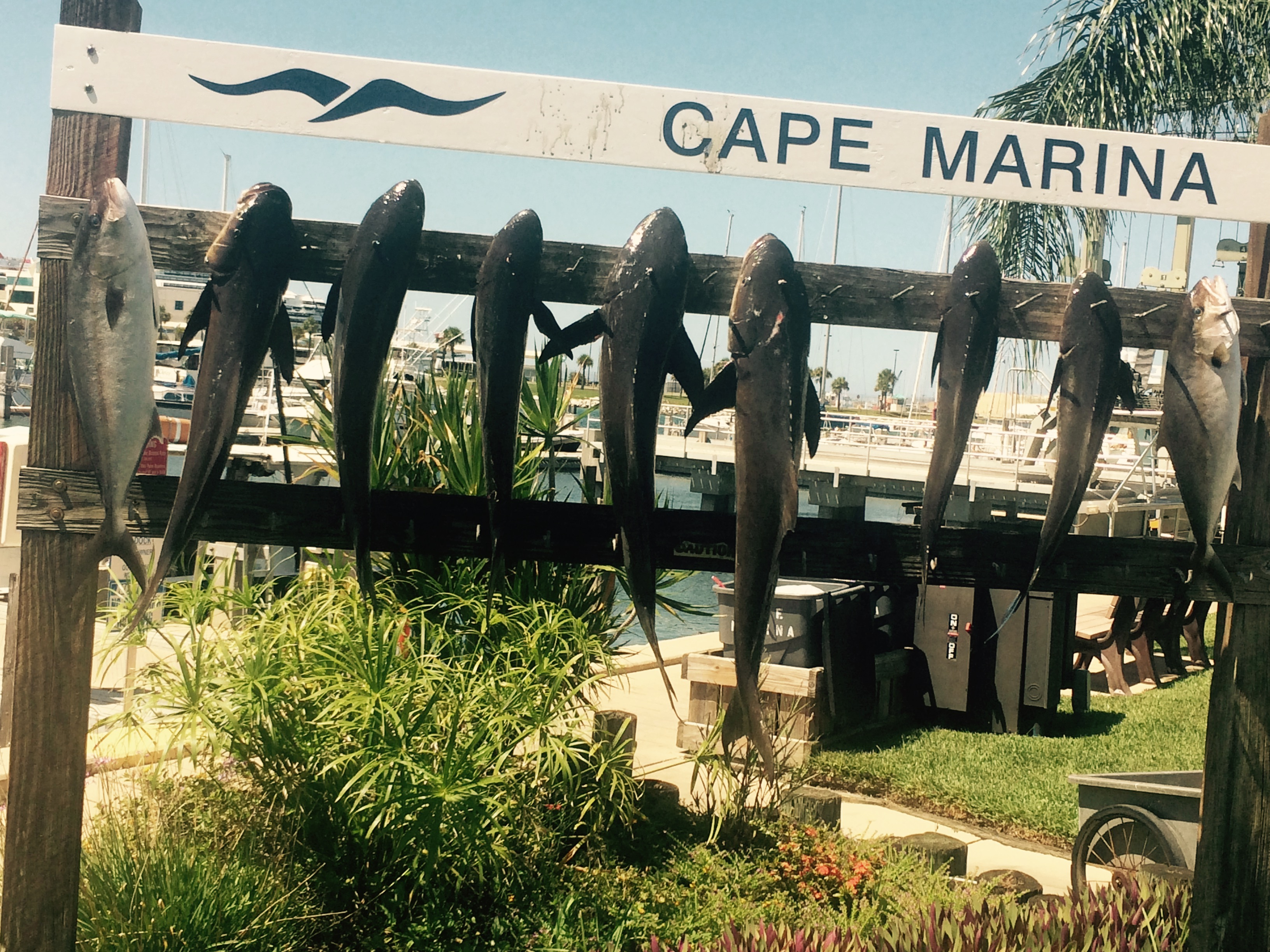 Ofishal Business Fishing Charters