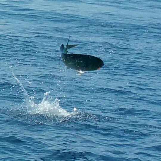 Ofishal Business fish photo