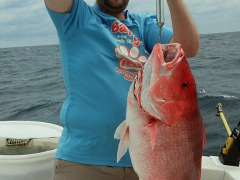 Ofishal Business American Red fish