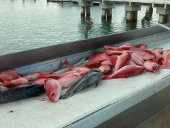 Ofishal Business cleaning table full of fish.